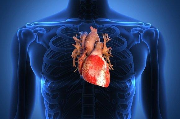 сердце обследование