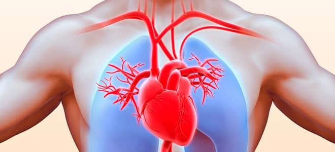система сердца