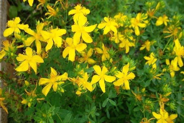 цветки на лугу